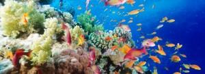 그레이트배리어리프 (Great Barrier Reef)에서 다이빙 하기