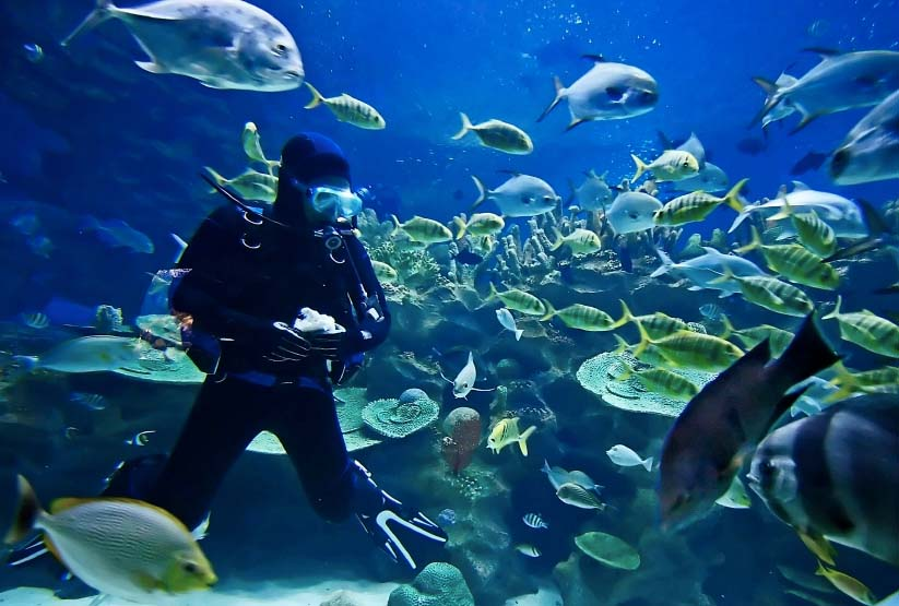 스쿠버 다이빙(Scuba Diving) 자격증 따기