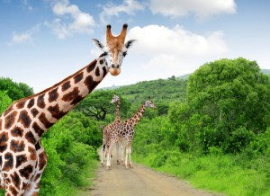 세렝게티-Serengeti