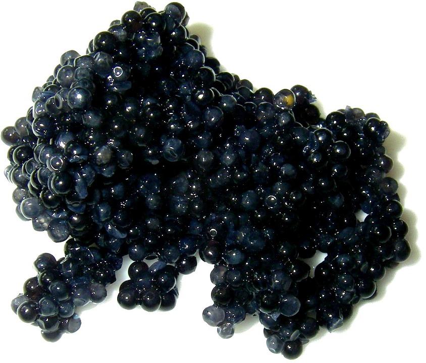caviar-캐비어