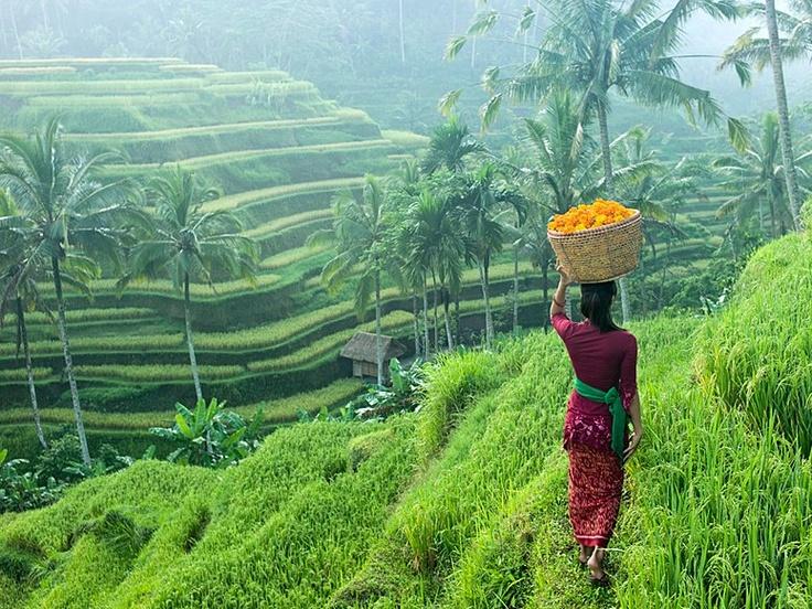 Bali-Vitality-Detox-Retreats-논