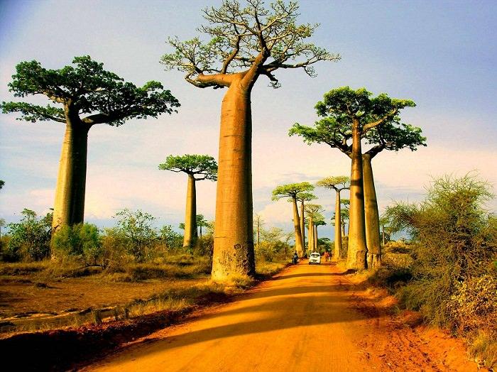 baobabtree-1476246511nkg84