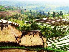 인도네시아 우붓 여행