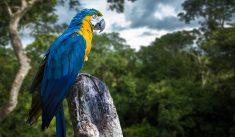 아마존 열대우림 방문