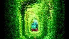 우크라이나 사랑의 터널