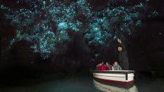 영화 아바타를 연상시키는 뉴질랜드 와이토모 반딧불 동굴