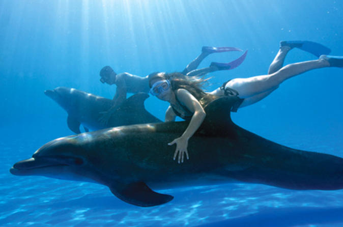 swimwiththedolphins-14832699258gk4n